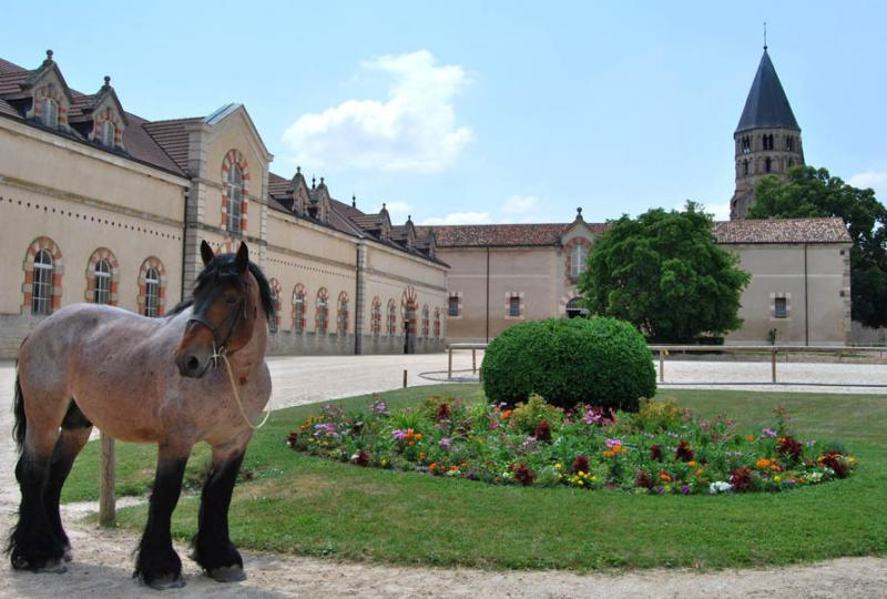 Haras National de Cluny/IFCE/C. Saillet